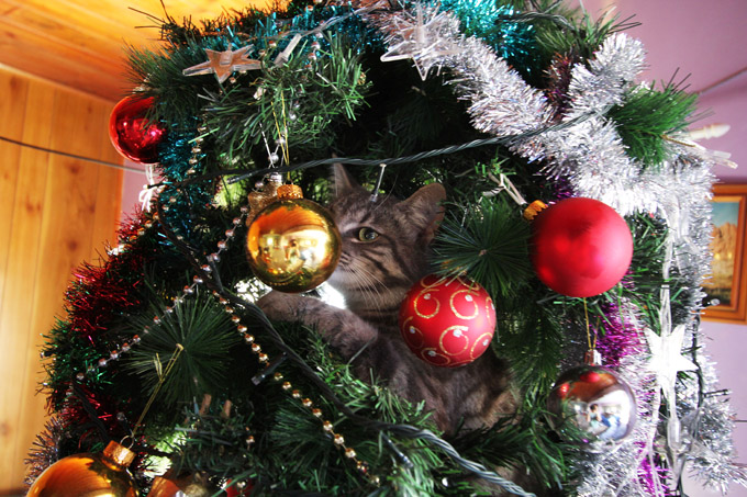 Alfred in the Xmas tree 009