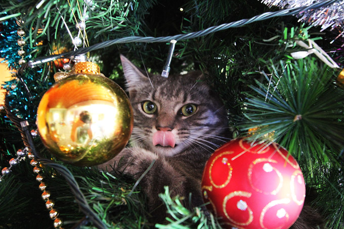 Alfred in the Xmas tree 013