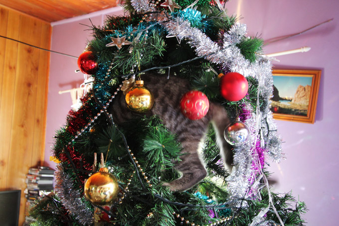 Alfred in the Xmas tree 014